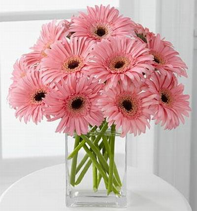 Russiaroses Daisies for Russia